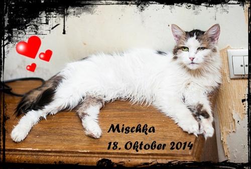 Mischka-2