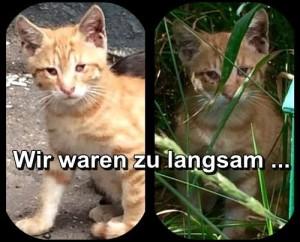 Notfall-Kitten-12