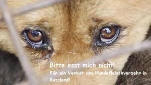 hundefleischverzehr